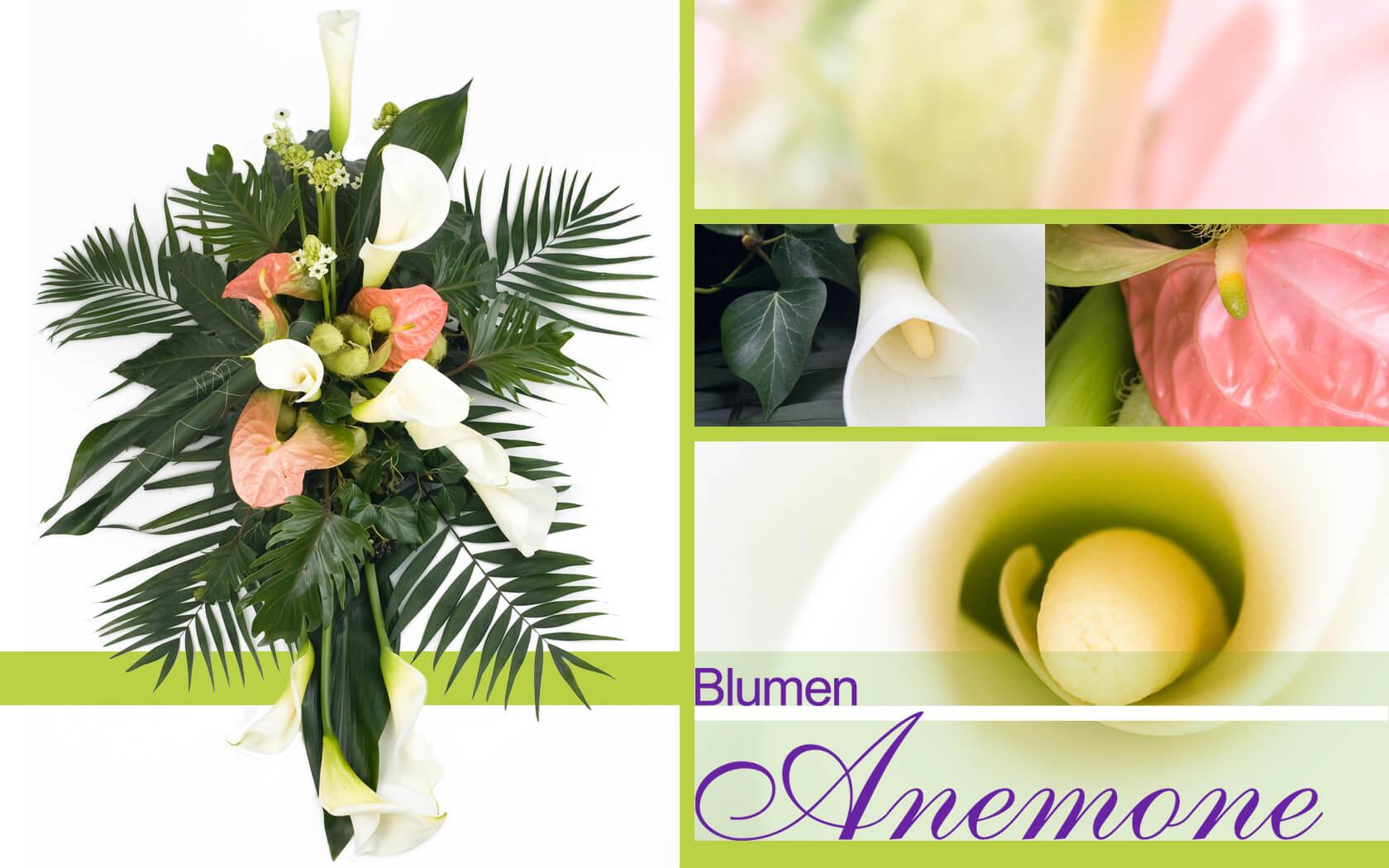 Blumen Anemone Mnchen  Ihr Florist in MnchenSendling