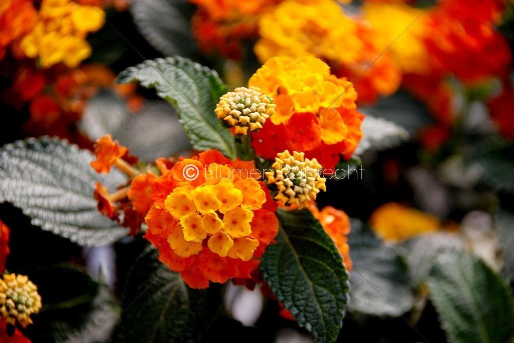 Sommerblumen  Blumen Ruprecht Gleisdorf