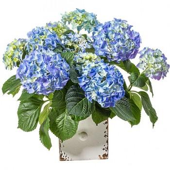 Zimmerpflanzen  Topfpflanzen  Blumen online bestellen  bundesweit