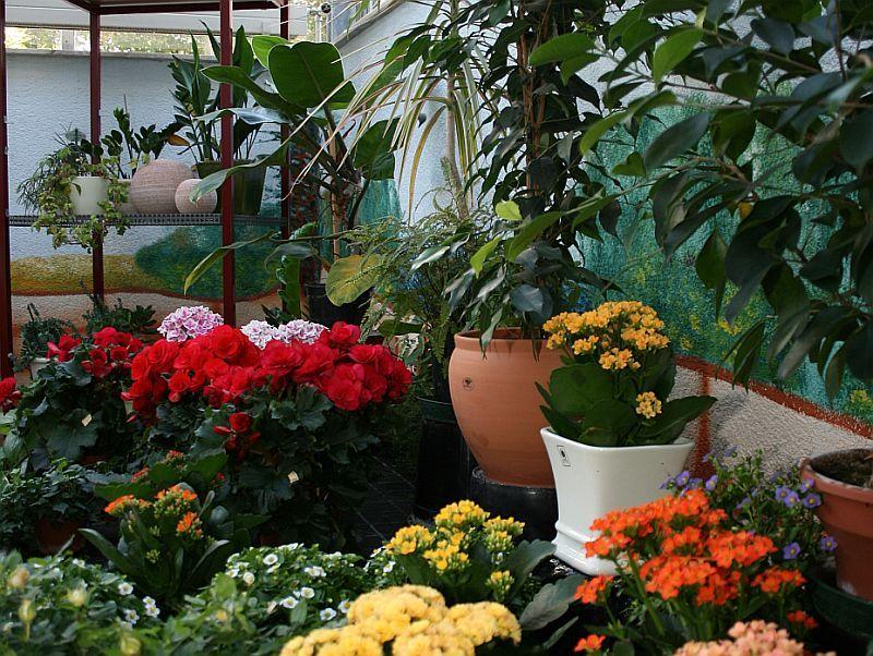 Blumen Winkler Waiblingen