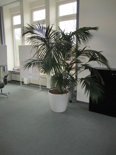 Office-Plants #3
