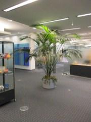 Office-Plants #8