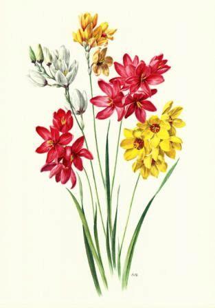 Zimmer und Gartenblumen