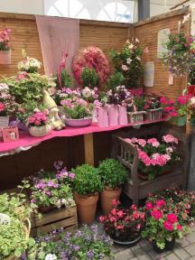 Pflanzen für innen und außen