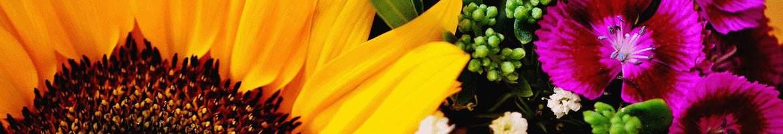 Die schnsten Gre vom Blumenversand  Online Blumenversand