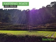 rantepao-rice-fields-2