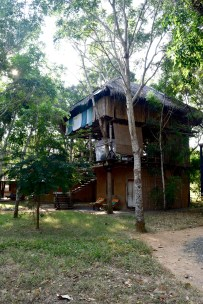 Our humble treehouse @ Sarai Village