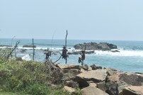 Bentota beach - traditional fishing