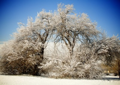 Winter Tree   Blurbomat.com