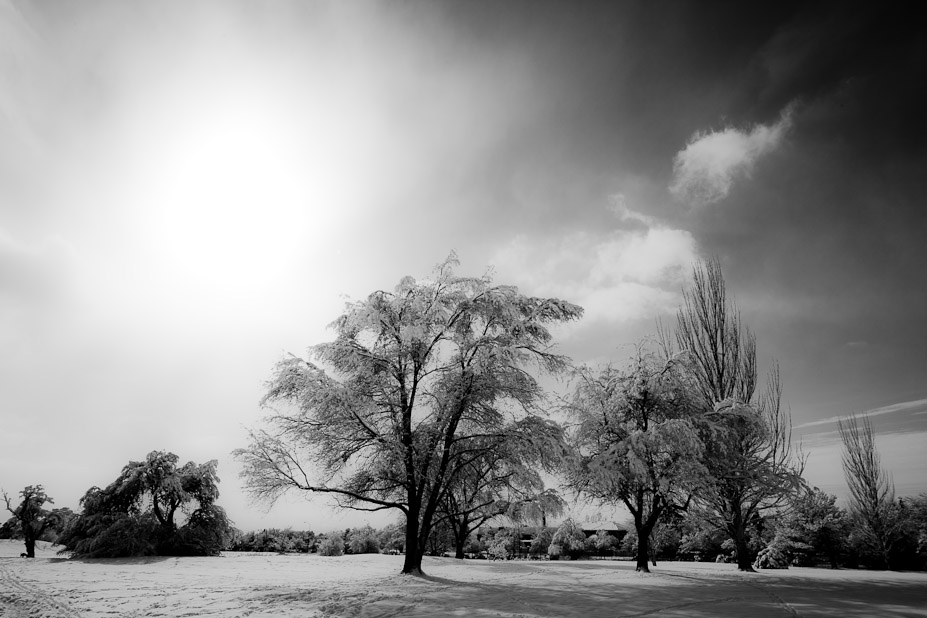 Monochrome Winter