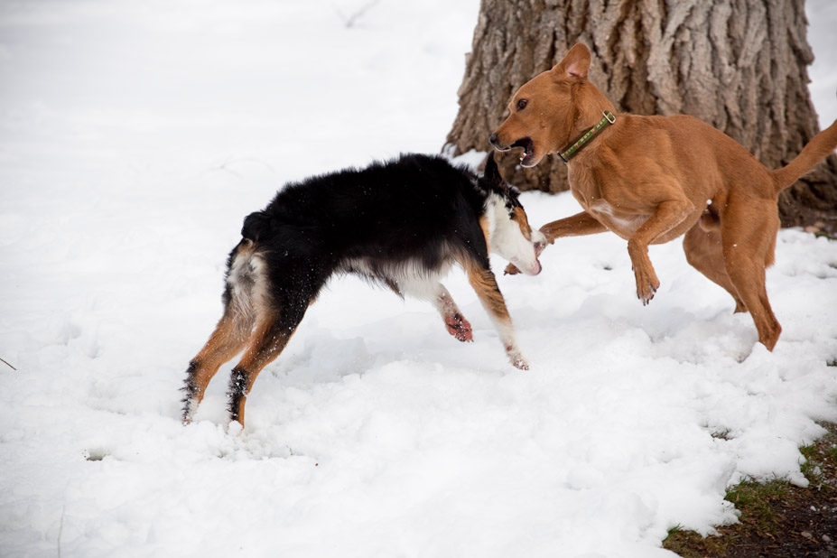 Hind Leg Confrontation