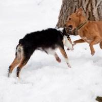 Hind Leg Confrontation | Blurbomat.com