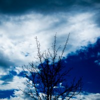 Black Blue Tree | Blurbomat.com