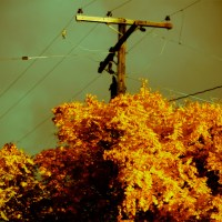 Power Tree - Autumn Colors | Blurbomat.com