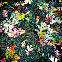 Autumn Floor | Blurbomat.com