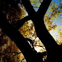 Sun Rising | Blurbomat.com
