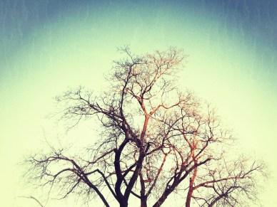 Snapseeded Trees