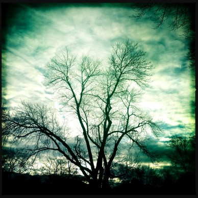 Hipstamatic Trees 1
