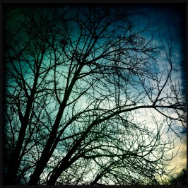 Hipstamatic Trees 9