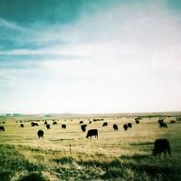 Grazers by Jon Armstrong | Blurbomat.com