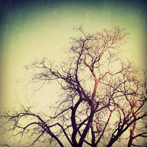 Gallery: Lovely Trees