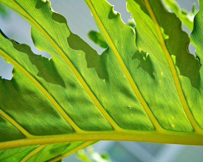 Leafy Greens