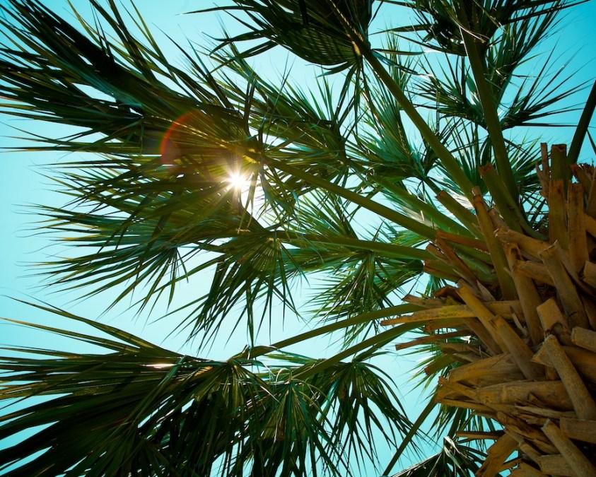 Palm Sun