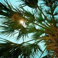 Palm Sun - Destin, Florida | Blurbomat.com