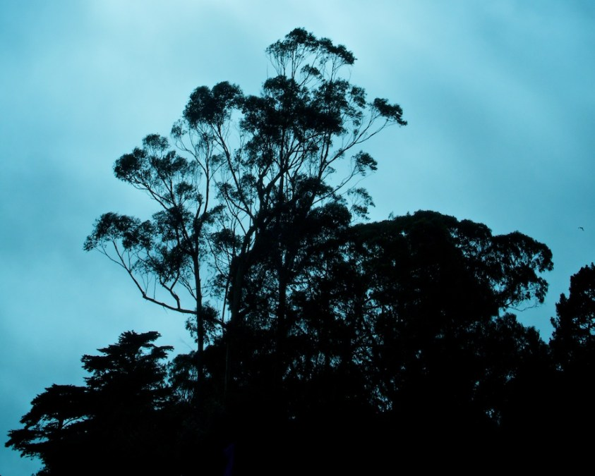 The Trees of Golden Gate Park