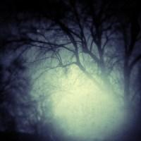 Bare Trees In the Morning | Blurbomat.com