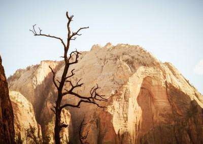Dead Tree | Blurbomat.com