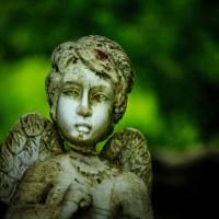 Broken Wing | Blurbomat.com