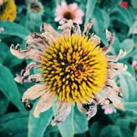 Portent - Dying Flower | Blurbomat.com