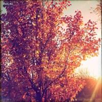 Backlit Oranges   Blurbomat.com