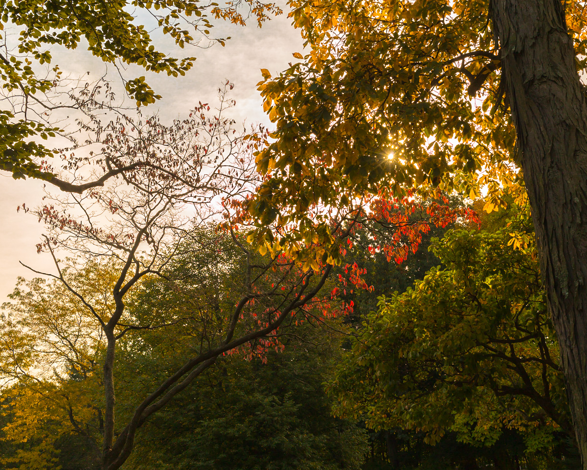 Fall Colors: Because It's Grey Outside
