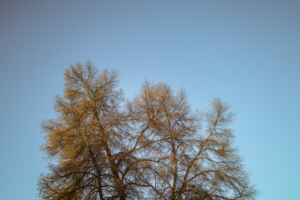 Bare Tree, Morning Light
