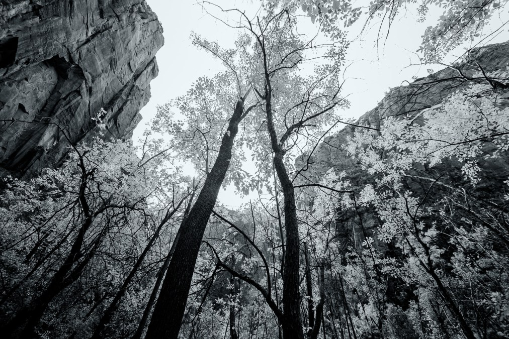 Zion National Park in Black and White