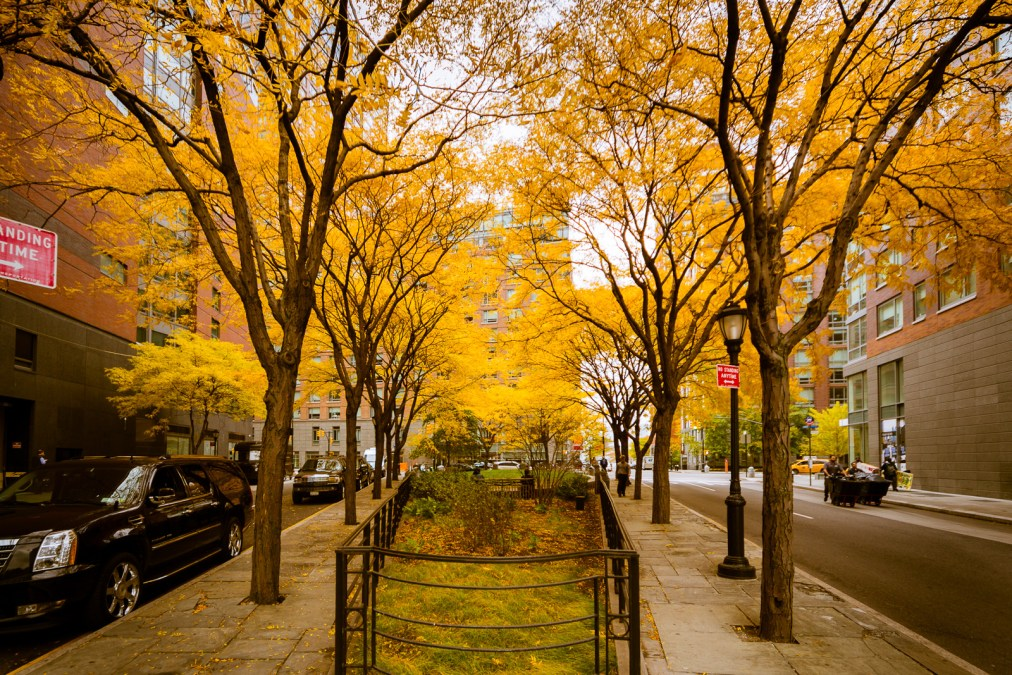 Yellow Canopy in Lower Manhattan
