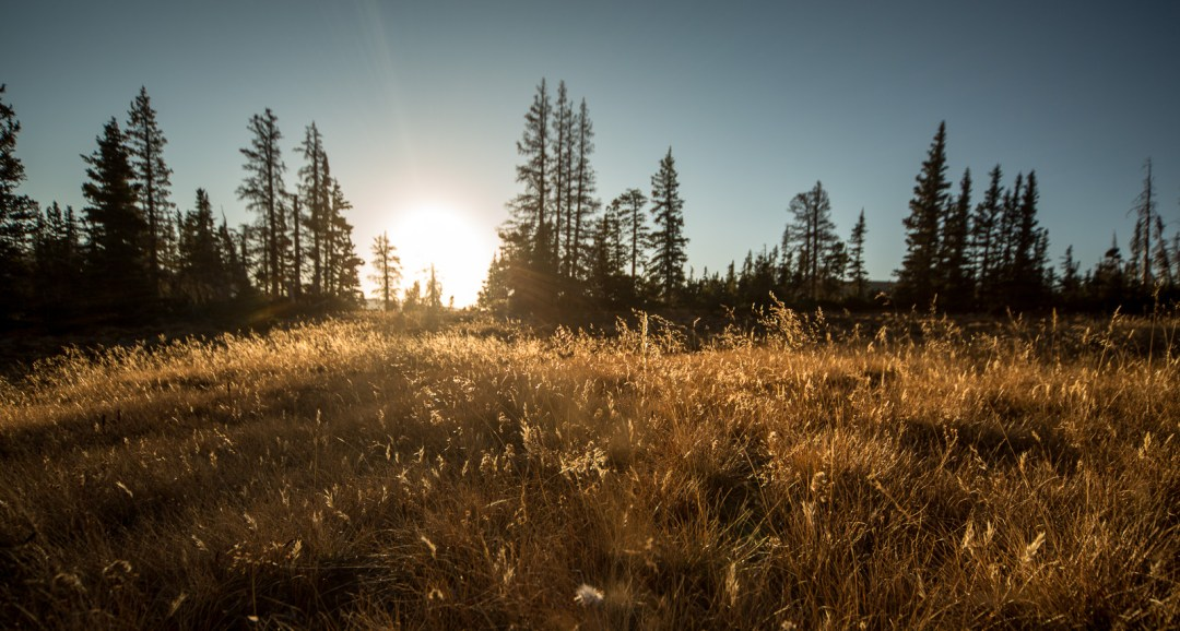 Sun hits the dying grass on Bald Mountain Pass, just off Highway 150, Uintah National Forest, Utah. September, 2015.