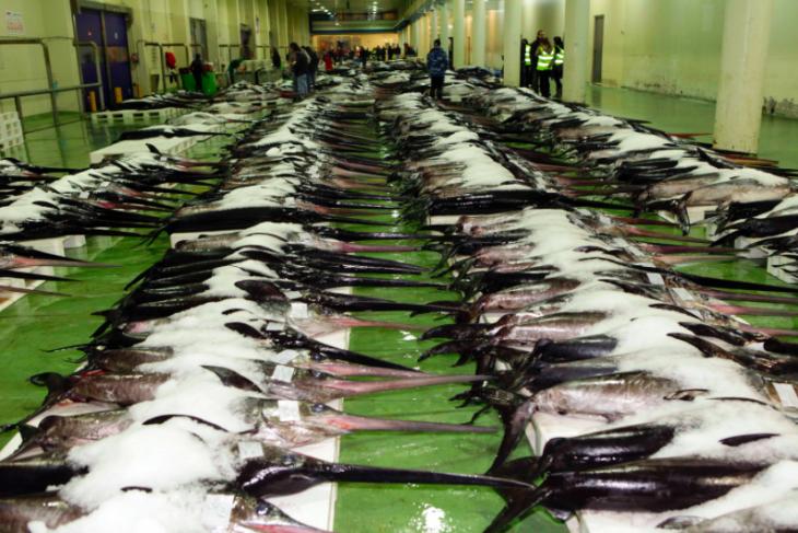 La lonja de Vigo: el gran supermercado del mar -