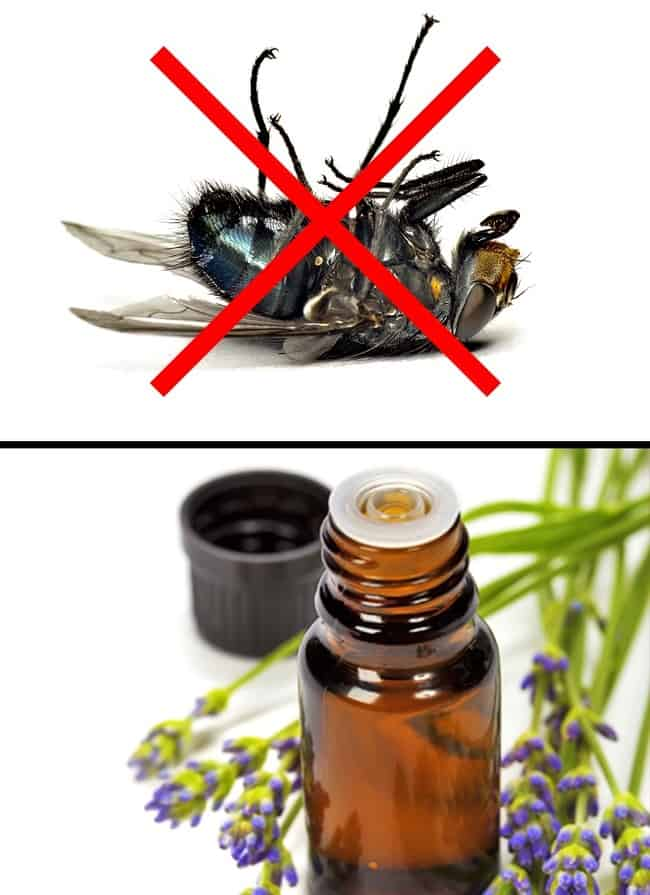 Some Ways You Can Stop The Entry Of Insects From Your House Ever Again 1