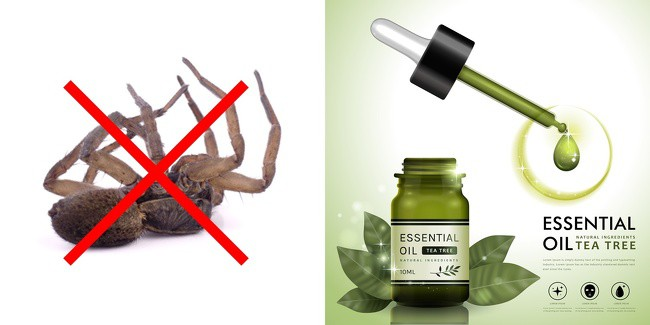 Some Ways You Can Stop The Entry Of Insects From Your House Ever Again 5