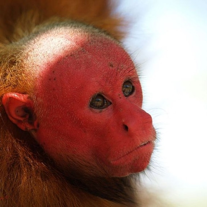 15 Rare Animals Existing On The Earth Which Are Hard To Imagine To Be Real 9