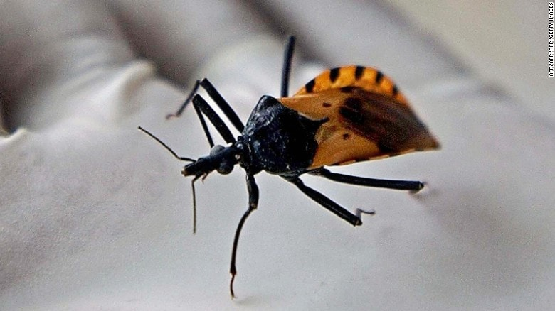 Be Aware Of The Tiny Kissing Bugs Killing Dogs And Children 5