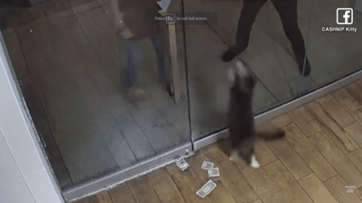 Cat Collects $1 From Each Passerby To Donate