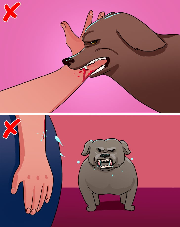 10 Best Things To Protect Yourself If You Are Attacked By The Dogs 5