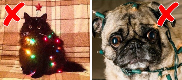 5 Worst Holiday Dangers That The Pet Owner Should Set To Be Aware Of Them 2