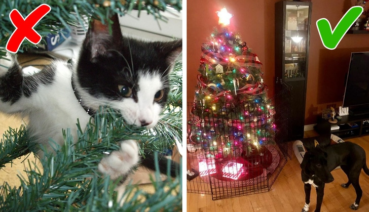 5 Worst Holiday Dangers That The Pet Owner Should Set To Be Aware Of Them 3