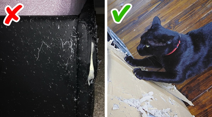 10 Best Life Hacks That Will Make Life Easier Of The Cat Owner 9