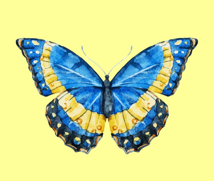 6 Hidden Facts Regarding Personality With The Choice Of Butterfly You Like 5